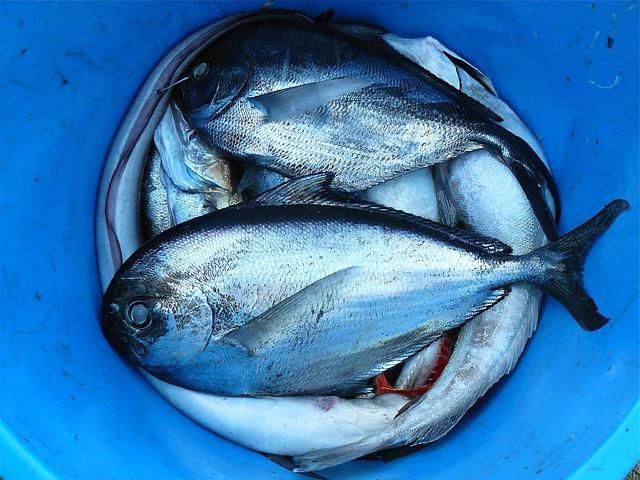 海釣りでショックリーダーを使う意味・役割について