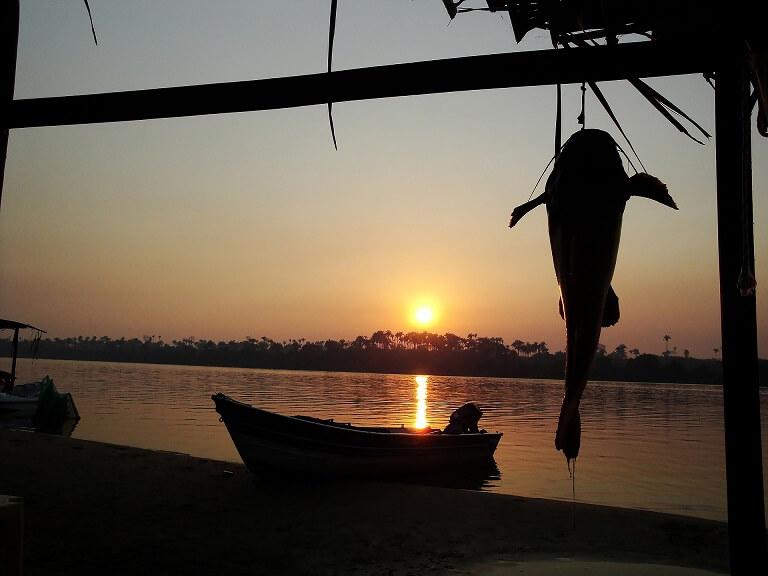 天井から吊り下げられた魚