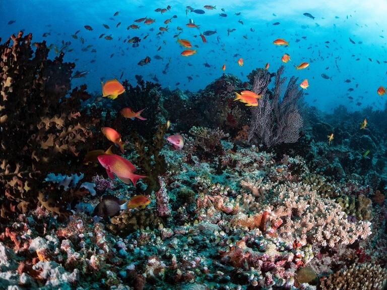 サンゴに集まる魚の群れ
